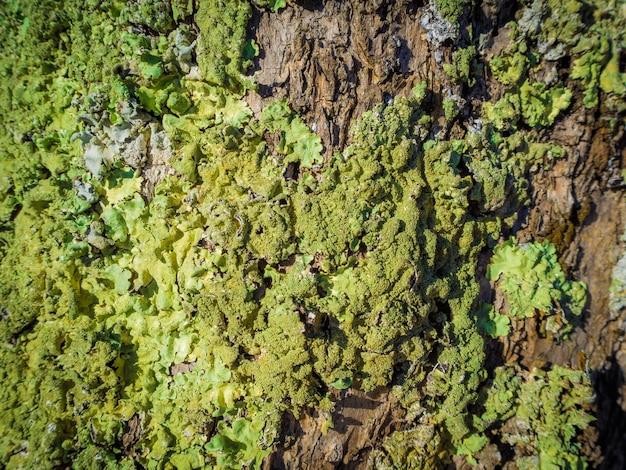 森の苔で覆われた木の樹皮のクローズアップショット 無料写真