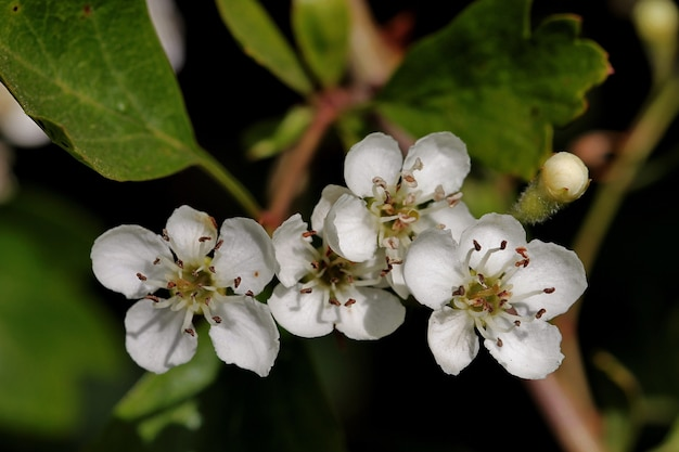木の枝に白い花のクローズアップショット 無料写真