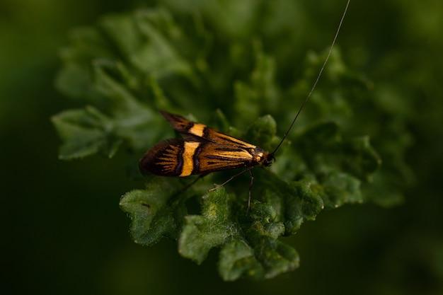 Colpo del primo piano di un insetto arancione e nero seduto su una foglia verde Foto Gratuite