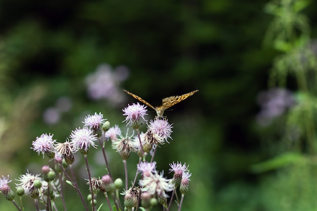 Closeup shot of an orange butterfly on violet flowers Free Photo