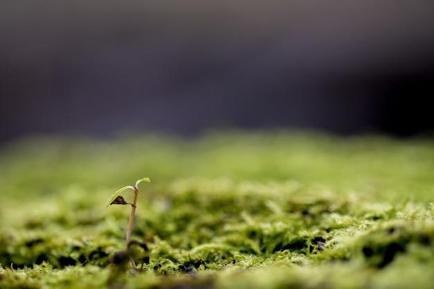 Colpo del primo piano di una pianta che cresce in una terra muscosa con un fondo vago - concetto che cresce Foto Gratuite