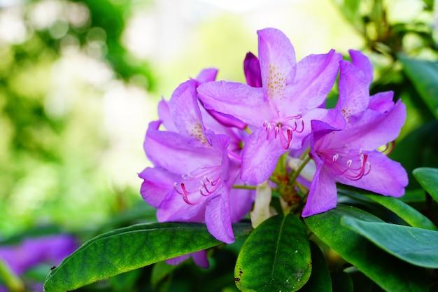 Colpo del primo piano di un fiore viola Foto Gratuite