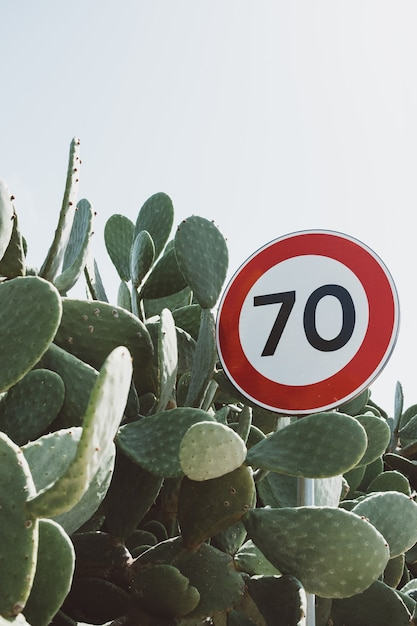 Closeup shot of a road sign surrounded by bunny ear cactus plant Free Photo