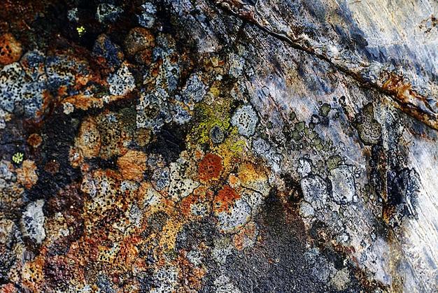 Colpo del primo piano di una trama di roccia con segni naturali colorati Foto Gratuite