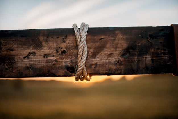 Closeup shot of a rope wrapped around a wooden plant Free Photo