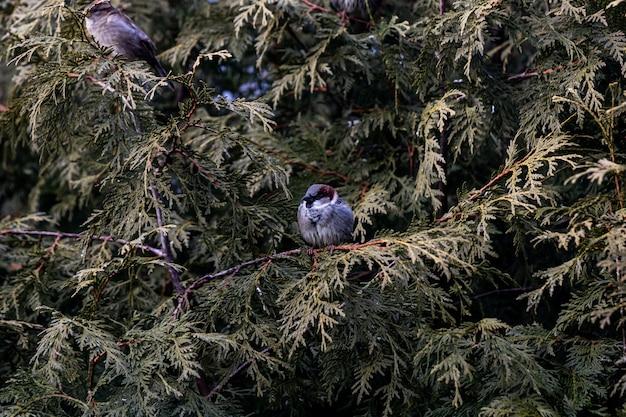 Colpo del primo piano di un piccolo uccello seduto su un ramo Foto Gratuite