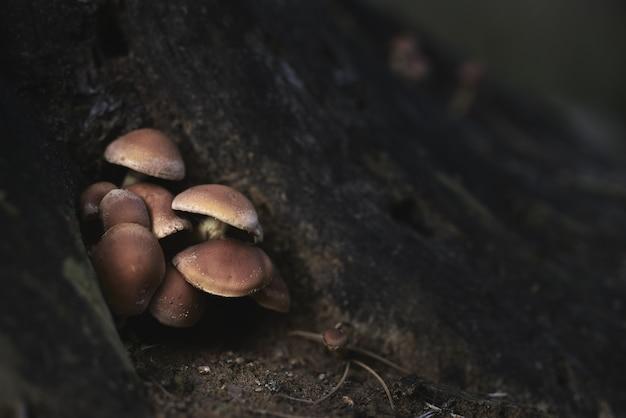 Colpo del primo piano di piccoli funghi che crescono vicino all'albero nella giungla Foto Gratuite