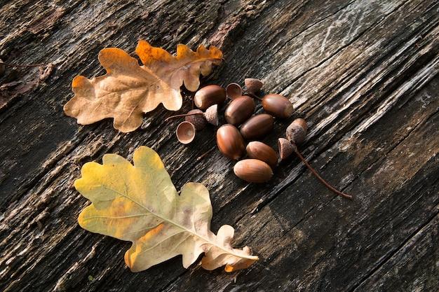 Colpo del primo piano di alcune ghiande accanto a due foglie secche messe su un pezzo di legno Foto Gratuite