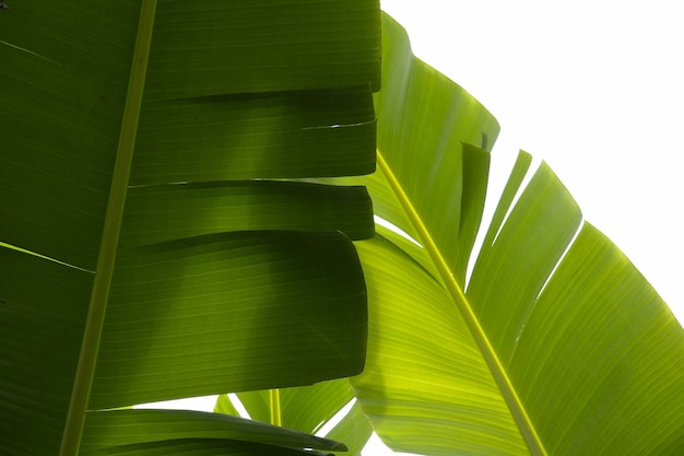 Closeup shot of tropical green plants with a white background Free Photo