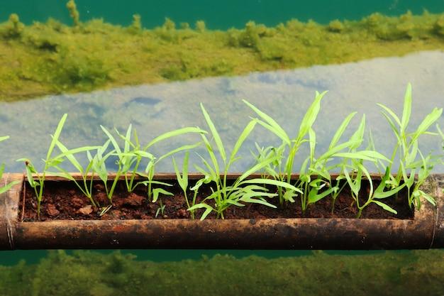 Colpo del primo piano di un tubo con piante verdi in esso Foto Gratuite