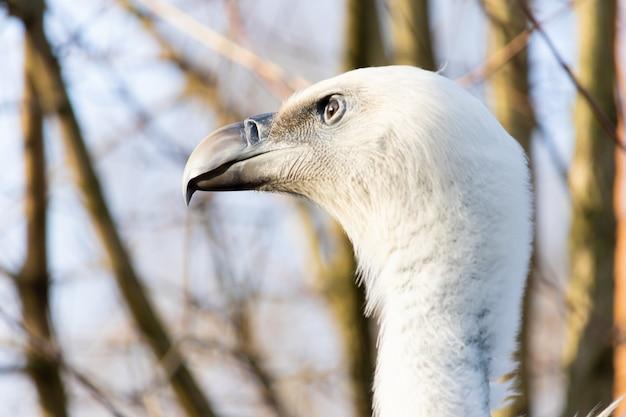 Colpo del primo piano della testa di un avvoltoio con occhi attenti Foto Gratuite