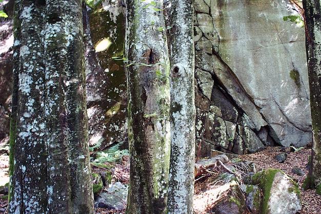 Colpo del primo piano dei licheni bianchi sui tronchi degli alberi Foto Gratuite