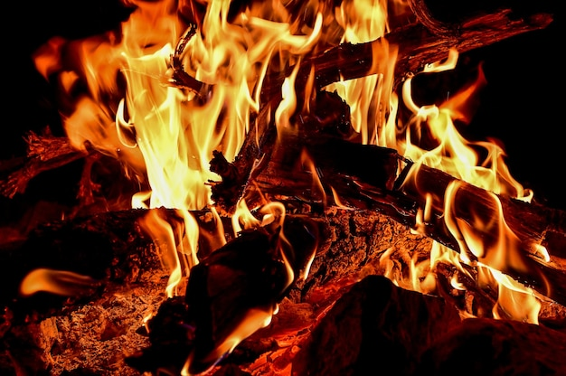 Closeup shot of wood burning in bright flames Free Photo