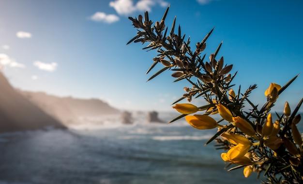Closeup colpo di fiore giallo su un albero e un mare Foto Gratuite