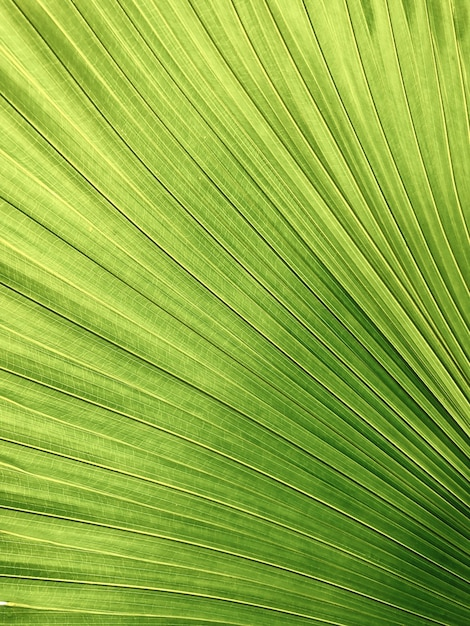 Closeup shot of a yellow-green color palm leaf Free Photo