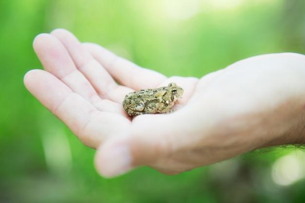 Primo piano di un piccolo rospo della california nella mano di una persona sotto la luce del sole durante il giorno Foto Gratuite