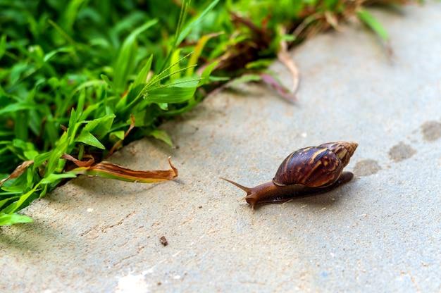 Closeup snail in garden Premium Photo