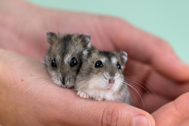 Welke hamster past bij mij?