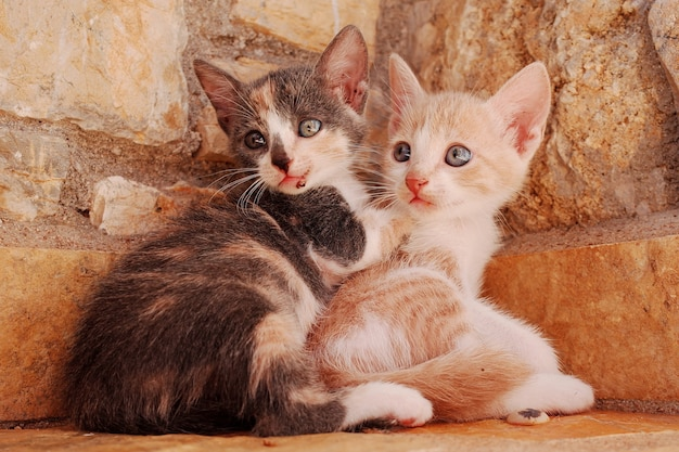 Closeup of two young cats cuddling together at a corner of a stone wall Free Photo