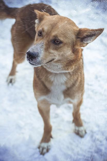 Primo piano colpo verticale di un cane marrone sotto tempo nevoso guardando lateralmente Foto Gratuite