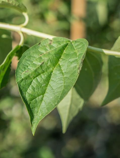 ぼやけた背景と緑の葉のクローズアップ垂直ビュー 無料写真