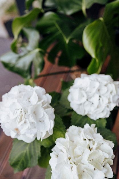 Closeup of white hydrangea flowers Free Photo
