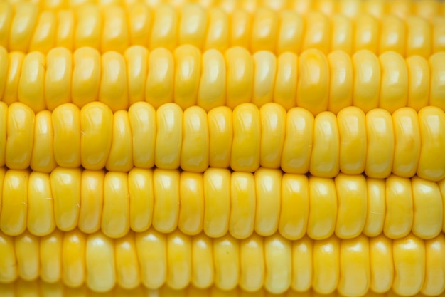 Closeup of yellow corn textured background Free Photo