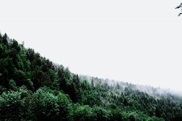 Облако дыма выходит из зеленого пейзажа касаясь неба Бесплатные Фотографии