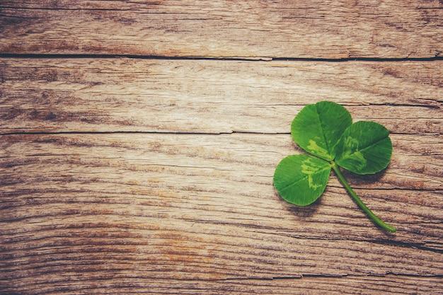Clover leaf. happy st. patrick's day. selective focus. Premium Photo