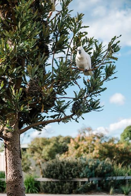 Cockatoo on tree Free Photo