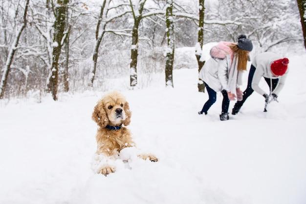 Кокер спаниель делает снеговика Premium Фотографии