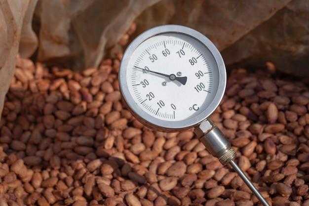 カカオ発酵温度、カカオ豆発酵プロセス、木製バレルで発酵させたカカオ豆の温度測定、カカオ風味の品質を維持します。 Premium写真
