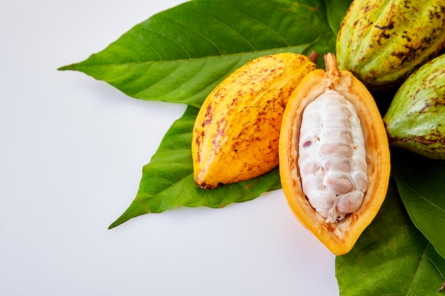 Cocoa pods with cocoa leaf on a white Premium Photo