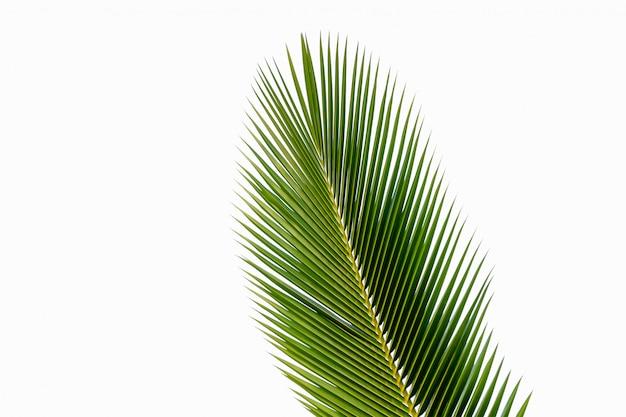 ココナッツの葉の分離 Premium写真