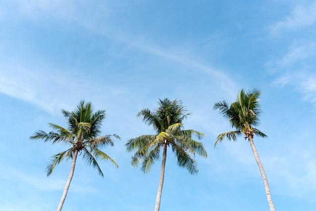 Coconut palm tree beach summer concept Premium Photo