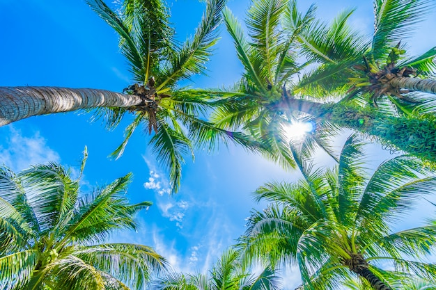 Coconut palm tree on blue sky Free Photo