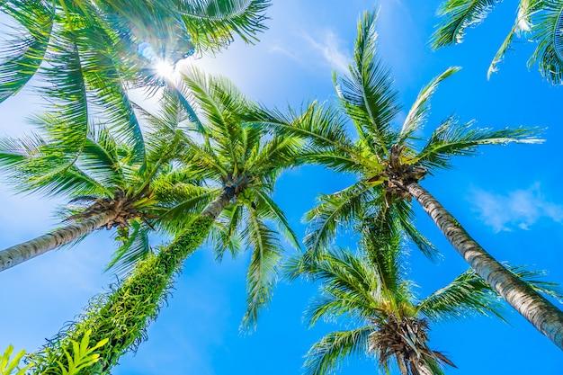 Coconut palm tree on blue sky Free Photo