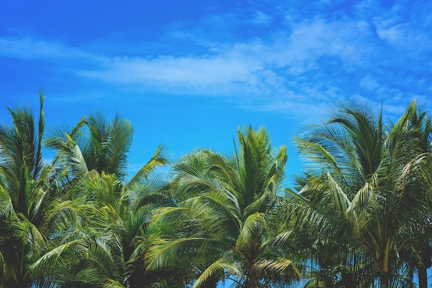 Coconut palm tree and sky nature at sea background with copy space. Premium Photo