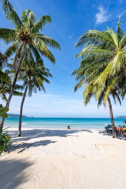 푸켓 파통 해변에서 코코넛 야자수와 청록색 바다. 여름 자연 휴가 및 열 대 해변 배경 개념 수직. 프리미엄 사진