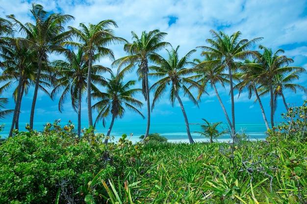 ココヤシの木、美しい熱帯の背景 Premium写真