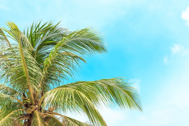 Coconut palm trees Premium Photo