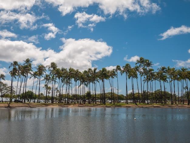 アラモアナビーチパーク、ハワイのココナッツツリー Premium写真