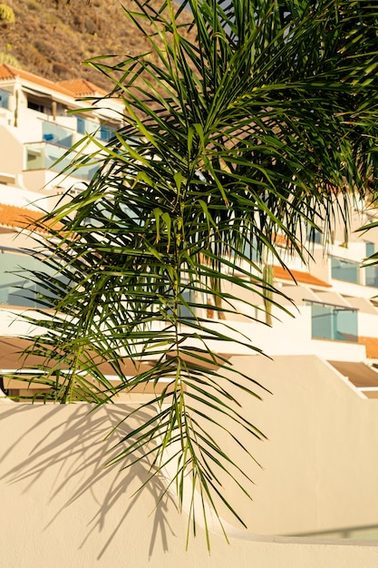 Coconut tree leaf with houses on background Free Photo