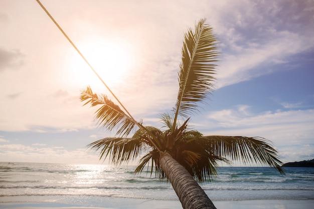 Coconut tree at sunset. Premium Photo