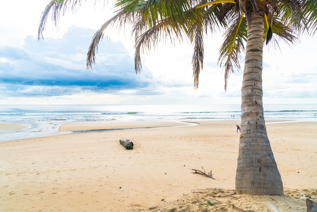 coconut tree with tropical beach Free Photo