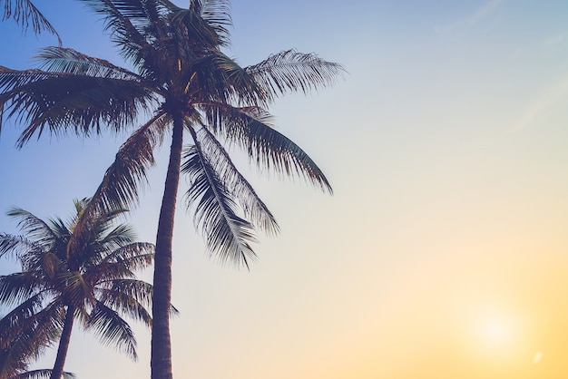 Coconut trees venice effect san Free Photo