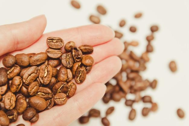 Coffee beans in farmers hand. Premium Photo