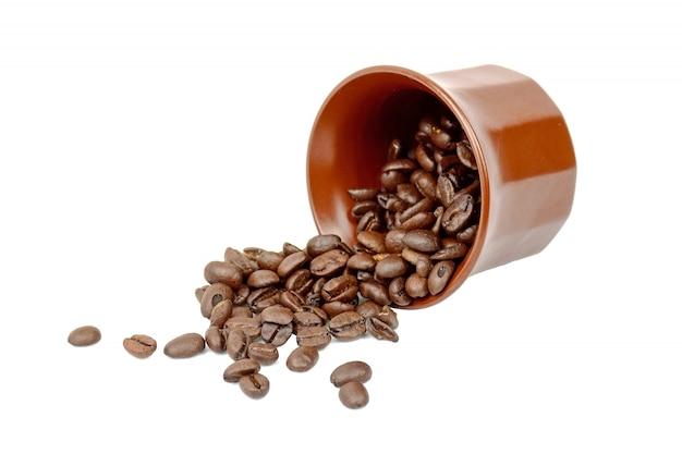 Coffee seeds Free Photo