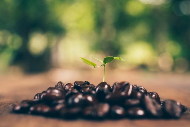 Coffee tree and coffee bean, concept Premium Photo