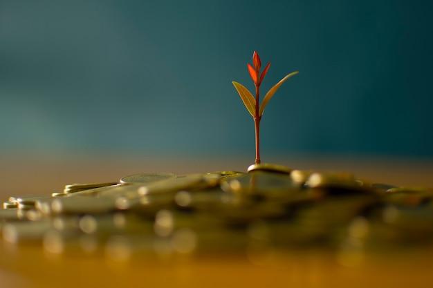 Coin growth concept Premium Photo